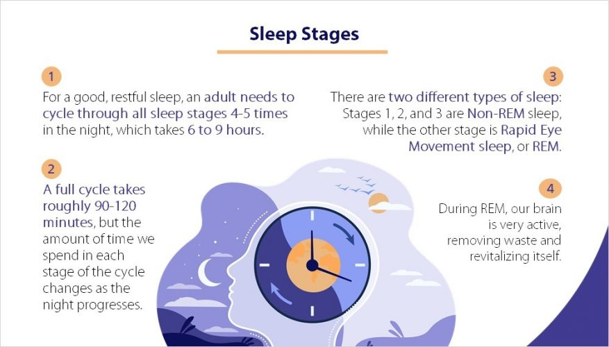 Sleep Stages Infographic